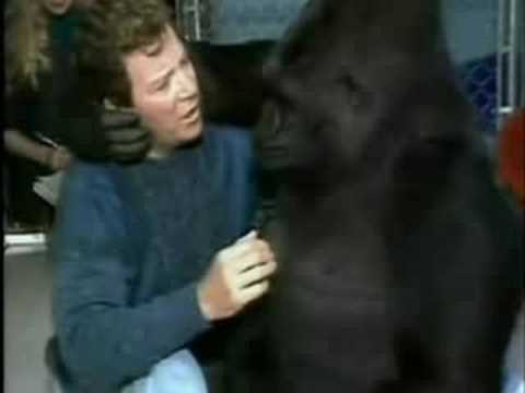 The Celebrity Encounters Of Koko The Gorilla For Her 43rd Birthday Today Open Culture