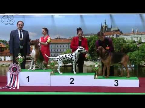 Prague Expo Dog 05/2015