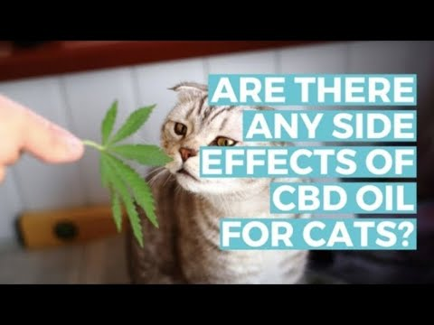 6 Things You Didn't Know About CBD Oil for Pets