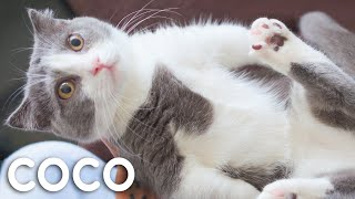The Life Of Kitten Coco