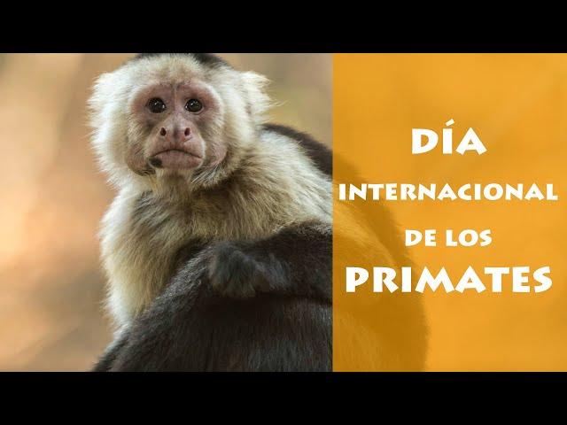 Día Internacional de los Primates 2021