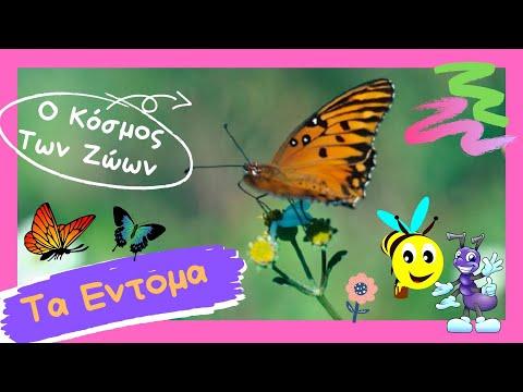 * Ο Κόσμος Των ζώων – Τα Έντομα (The Insects)