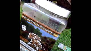 Repotting Pawpaw and Dunstan chestnut tree