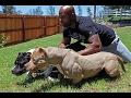 DOG BREED Best BEST HUNTING Fastest Dog Breed [Mr Fahey]