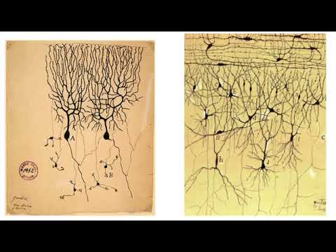 Demarcation and Dogma in Neuroscience