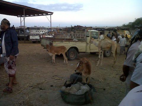 جولة في سوق عدن للمواشي