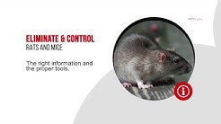 Professional Advice For Rodent Control