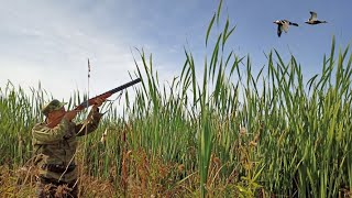 Охота на утку 2021 Охота на уток с манком