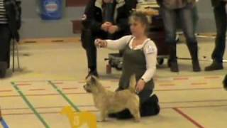 Cairn Terrier Zalazar La Belle Best of Breed