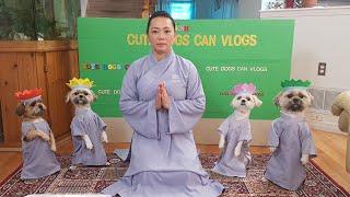 Phật Pháp nhiệm mầu, Bốn bé chó tuyệt vời đội h๐a lễ Phật, mừng ngày Phật đản 2020