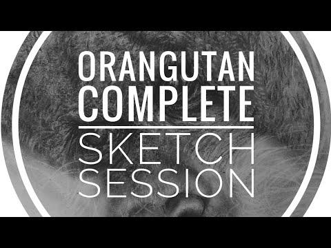 [Orangutan Full Drawing] Real-Time 60-Minute Carbon Pencil Sketch