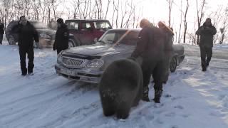 медведь Яшка