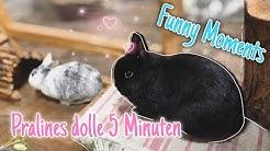 Die verrückten 5 Minuten bei Kaninchen