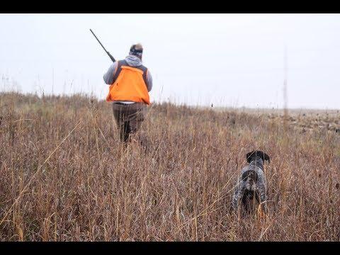 Early Iowa Pheasant 2017