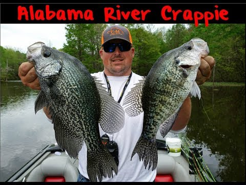 Alabama River Crappie Fishing
