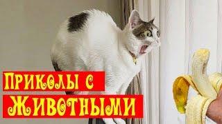 Я Ржал ПолЧаса! 😂 Приколы с животными/ Смешные испуги животных