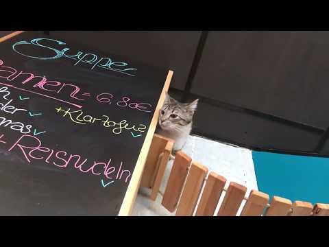 Katzencafé Karlsruhe