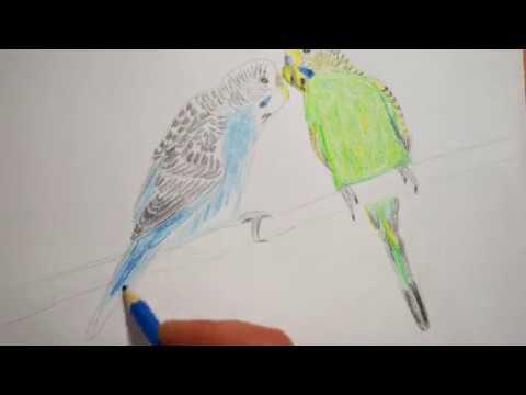 Wellensittiche Zeichnen Vögel Malen