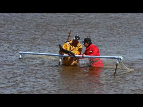 Ep  83 Margaret Owen, Haaf Netting River Lune Salmon