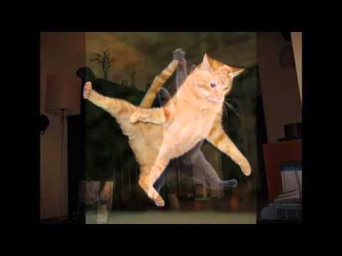 飛び猫画像でスライドショーをつくってみた|Jumping Cat