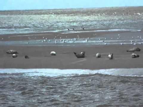 Cuxhaven und Fahrt zu den Robbenbänken - YouTube