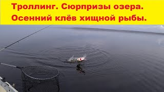 Троллинг Сюрпризы озера Буртниекс Осенний клёв хищной рыбы Fishing on the Burtnieks lake