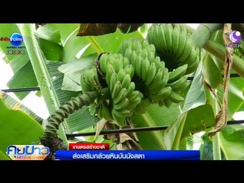 เกษตรสร้างชาติ : ส่งเสริมกล้วยหินบันนังสตา