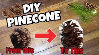 How to Paint Pinecone | DIY PINECONE