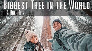 BIGGEST TREE IN THE WORLD - U.S. Road Trip 2018