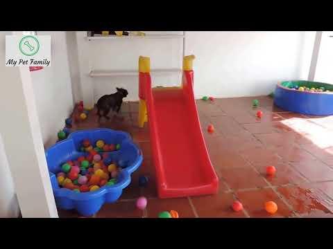 Vui Cùng Chó Mèo - Phần 1