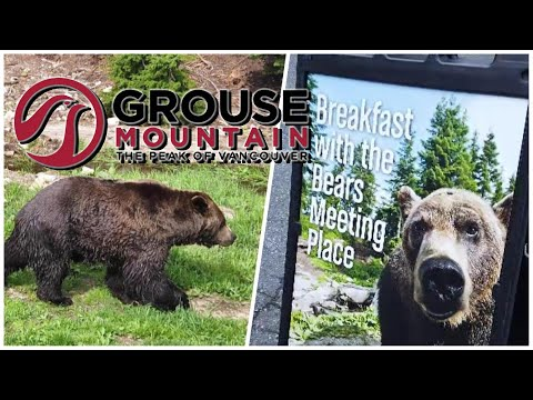 Breakfast With The Grizzlies @ Grouse Mountain