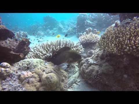 Posing Giant Moray - Posierende Riesenmuränen [GoPro HD]
