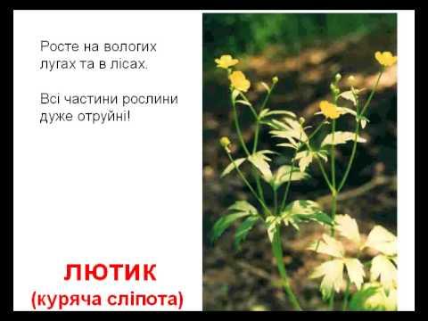 Рослини отруйні