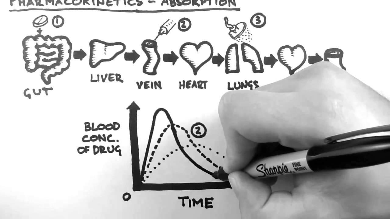 Pharmacokinetics 2 - Absorption - YouTube