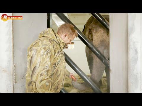 ПЕРВЫЙ УЖИН в Тайгане - СЛОНЫ еще немного волнуются. Lions life in Taigan.
