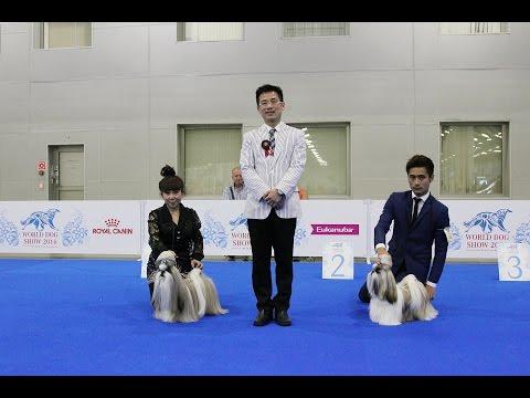 World Dog Show 2016 Moscow, Shih Tzu