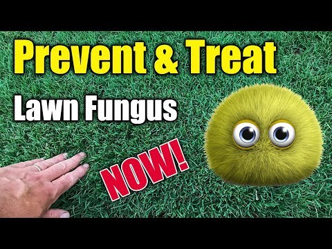Lawn Fungus and Disease Treatment