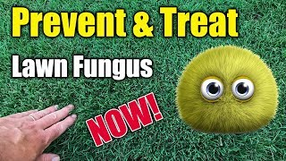 Kill Lawn Fungus and Disease Treatment