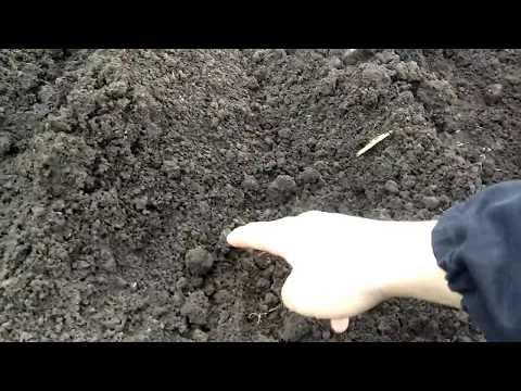Вопрос: Как сажать огород, если постоянно идут дожди?