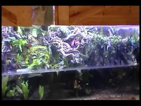 1700 Gallon Stingray Aquarium And Poison Dart Frog Vivarium Youtube