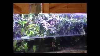 1700 gallon Stingray Aquarium and Poison dart frog Vivarium
