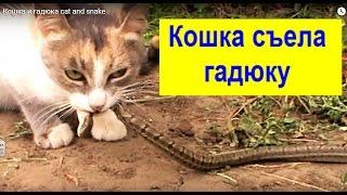 Кошка и гадюка cat and snake