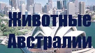 Слова для детей. Учимся говорить. Животные Австралии