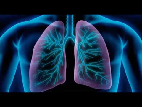 bronchopneumopathie chronique obstructive cachexie perte de poids