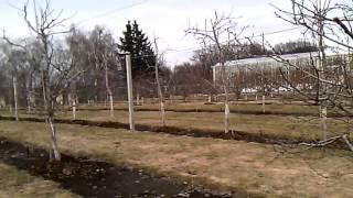 Современный сад. Как сделать по уму.