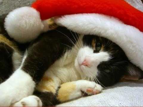 Immagini Natale Con Gatti.I Gatti Di Natale E Christmas Cats Avi