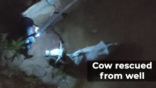 Hyderabad: Rescue team travels 130 km to pull out a cow from 60-ft deep well