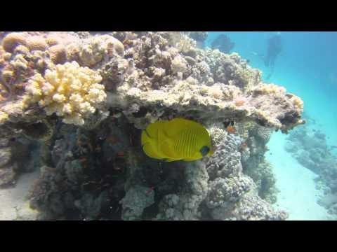 Schnorcheln im Roten Meer - Teil 3из YouTube · Длительность: 7 мин34 с
