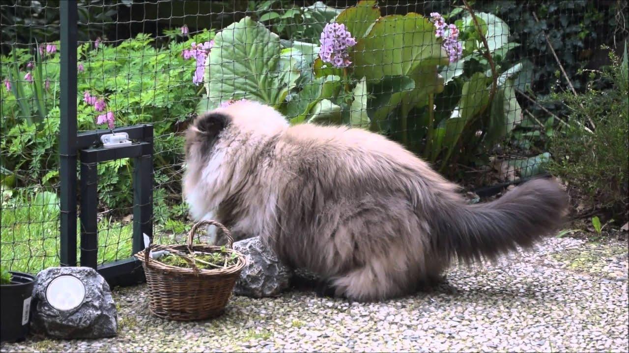 Katze Testet Katzennetze Nrw Youtube