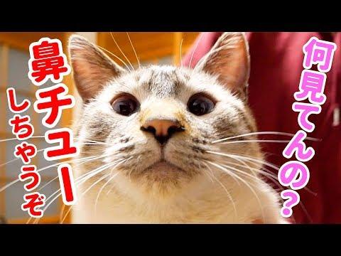 ツンデレ猫の鼻チューがかわいすぎてGW明けも仕事を頑張れそうです